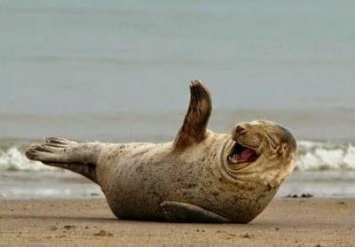 3c4cf-happy-seal-301.jpg